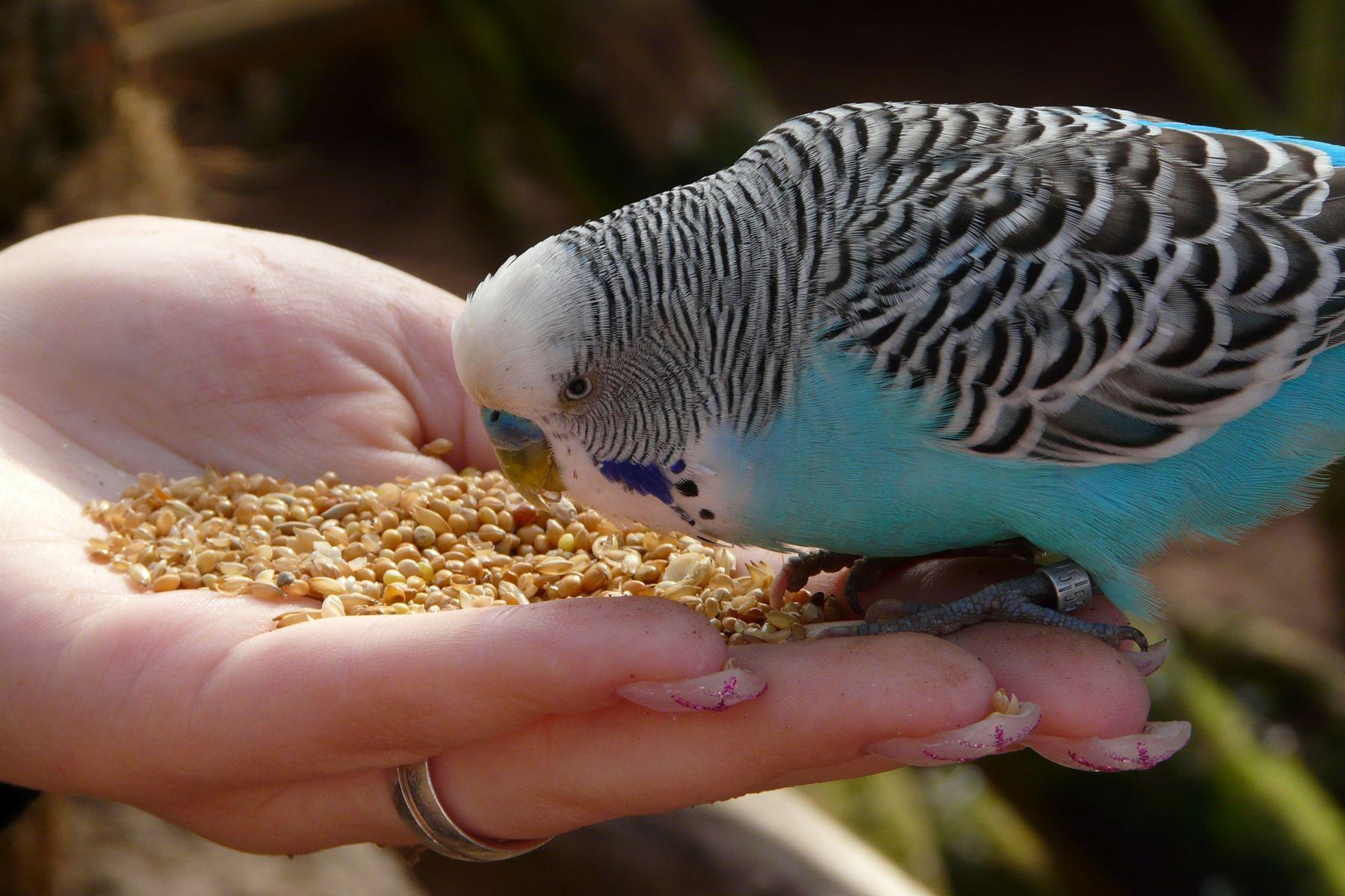 Vogelfutter im Lichte des Strafrechts